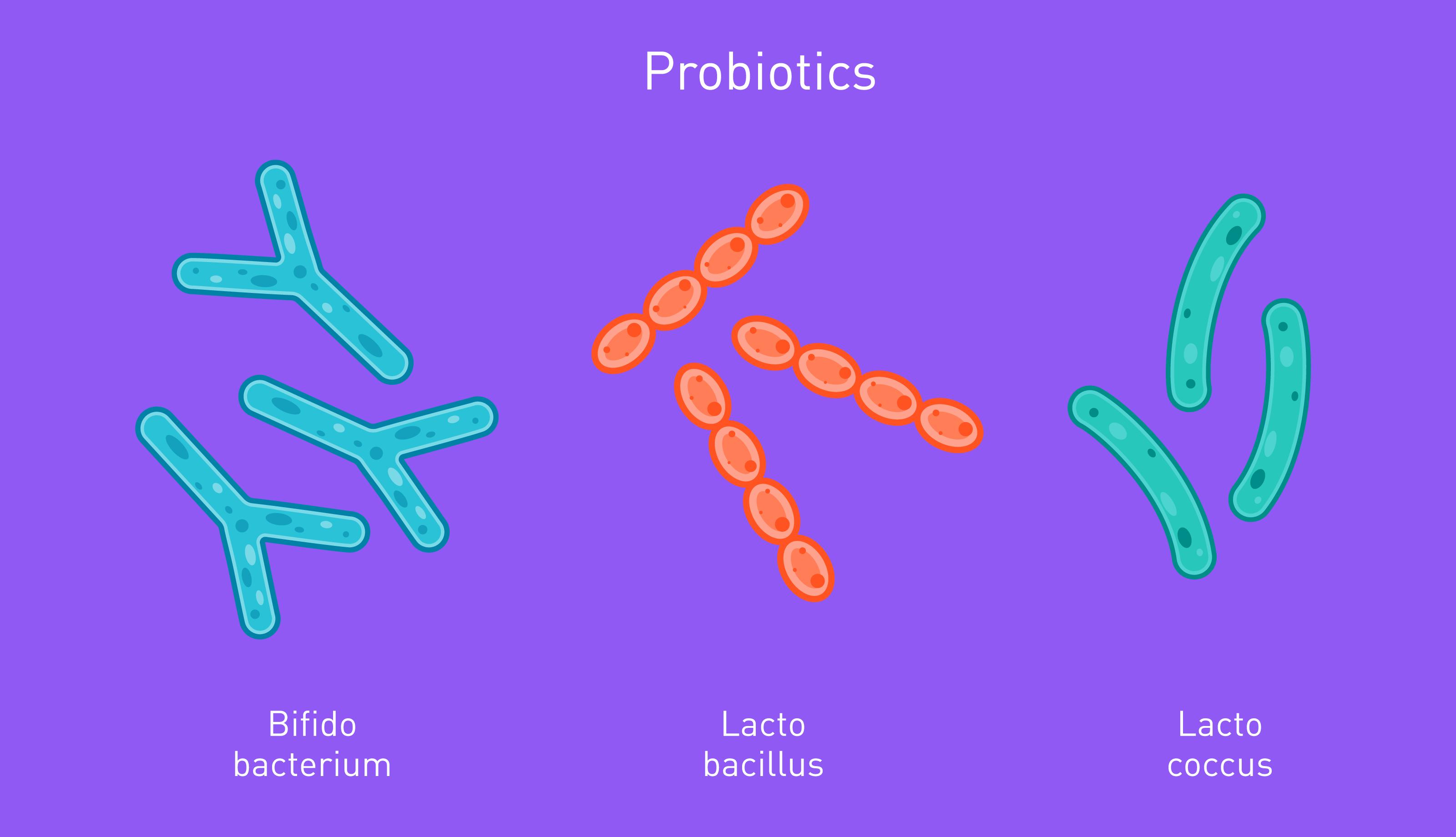 Common bacterial probiotics are Lactobacillus, Bifidobacterium, and Lactococcus.