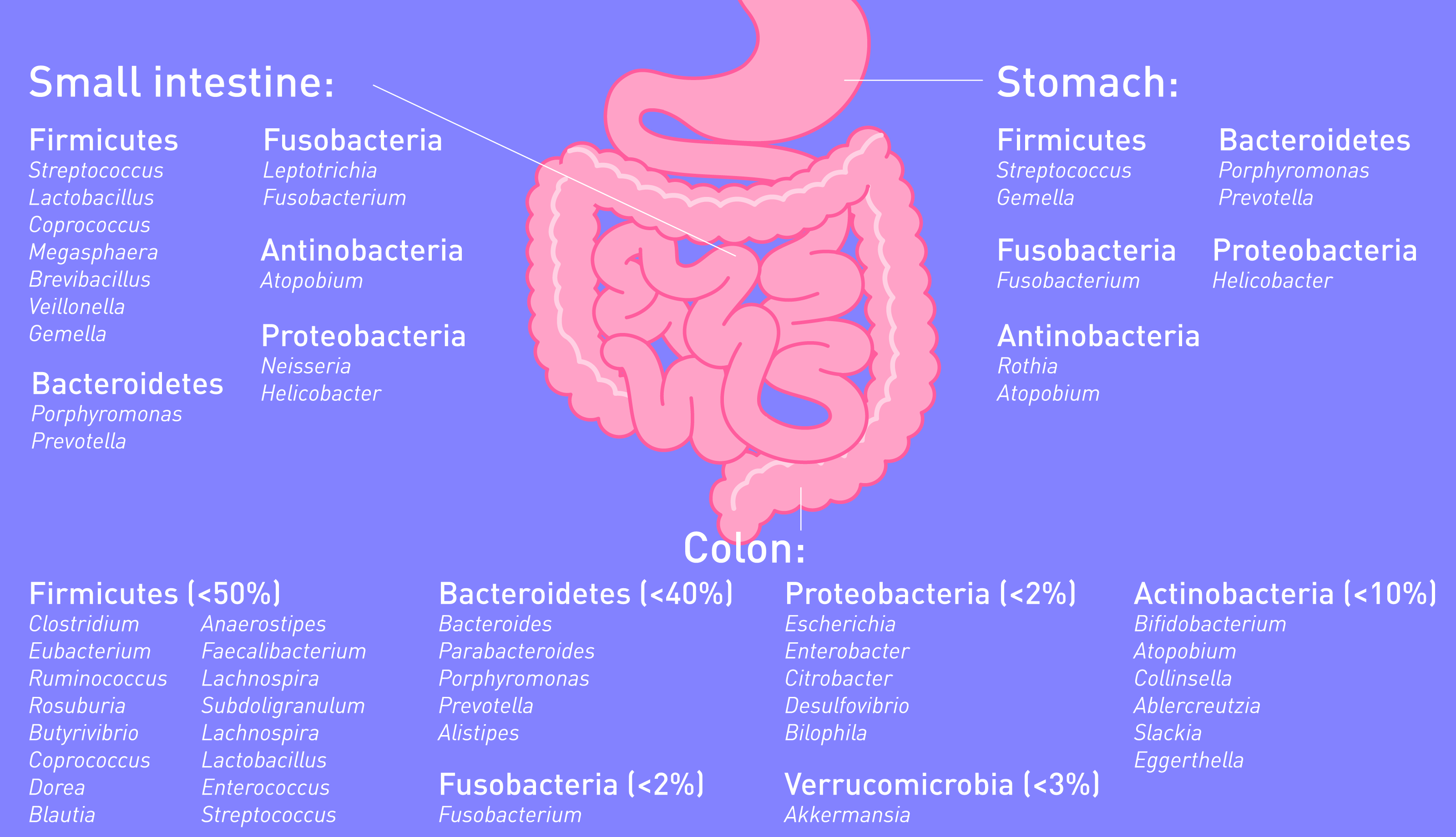 Your digestive health depends on the bacteria inside it by Atlas Biomed