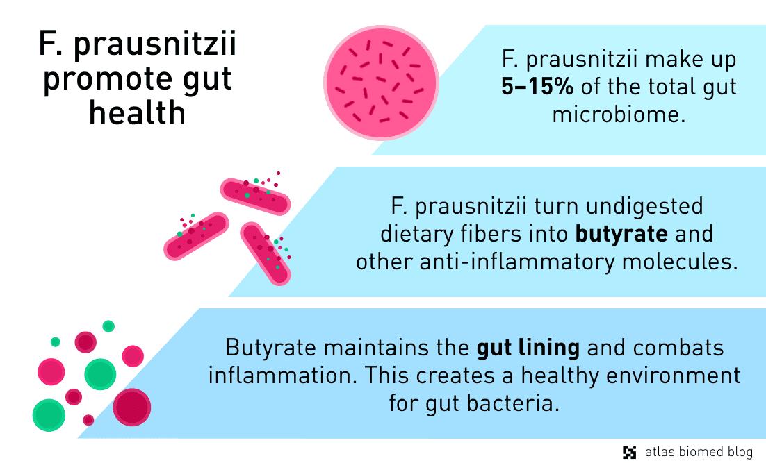 Anti-inflammatory functions of Faecalibacterium prausnitzii.