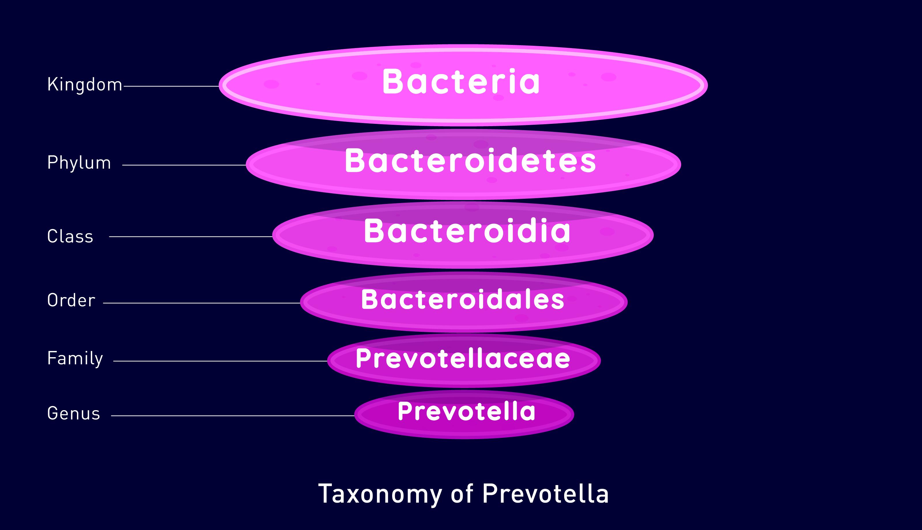 Prevotella bacteria