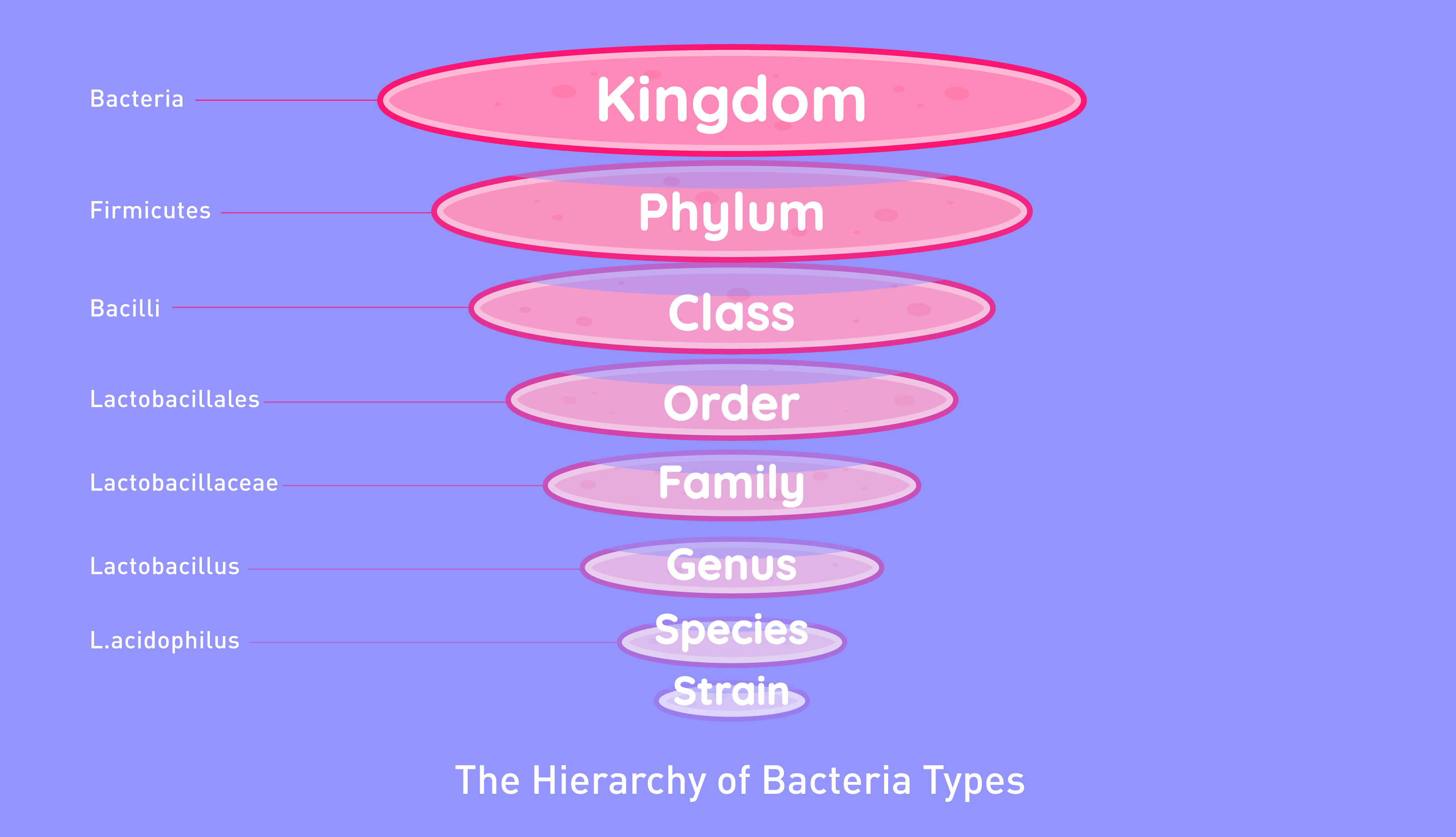 Firmicutes phylum.