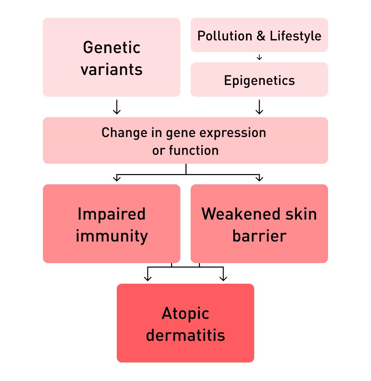 Risk factors for atopic dermatitis.