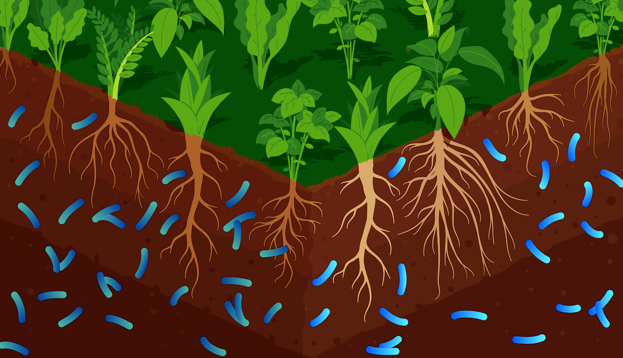 The Facts On Soil Based Probiotics Uses, Benefits And Side Effects